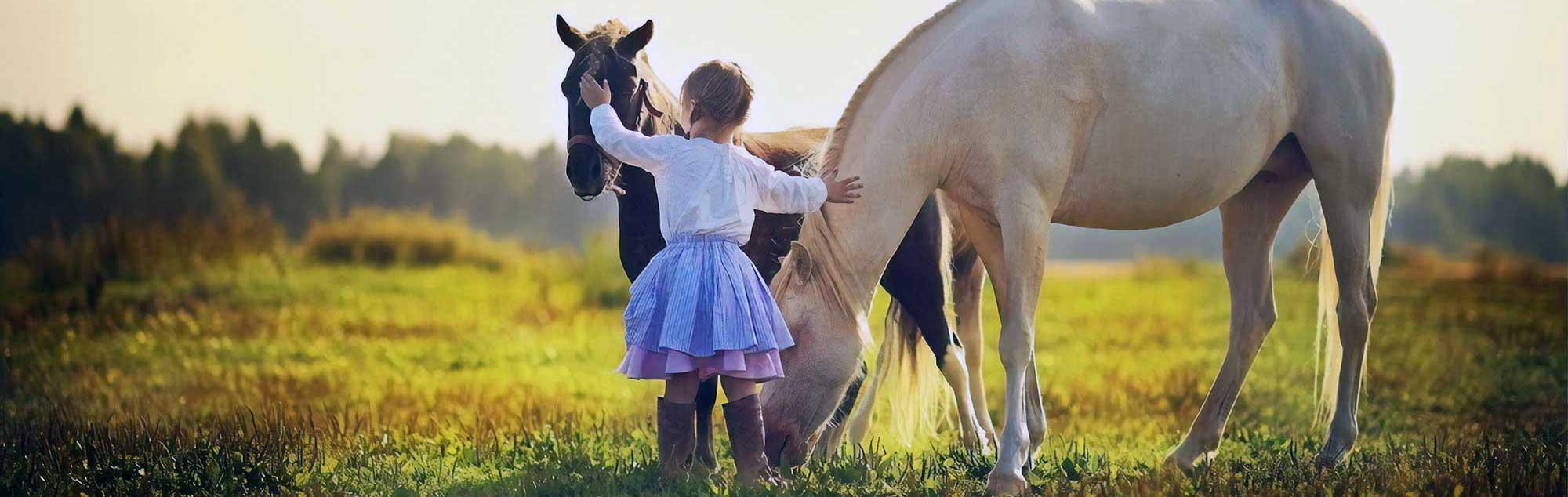 Corso di avvicinamento al cavallo